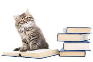 livres et articles chat chaton