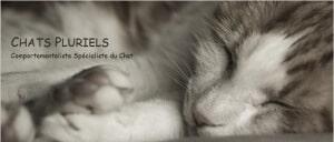 Comportementaliste chat Oise Ile-de-France Paris