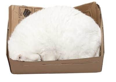 Comportement de sommeil